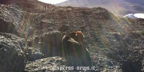 Fotografato un cane che prendeva il sole sulla cima del Kilimanjaro a 5895 metri di altezza